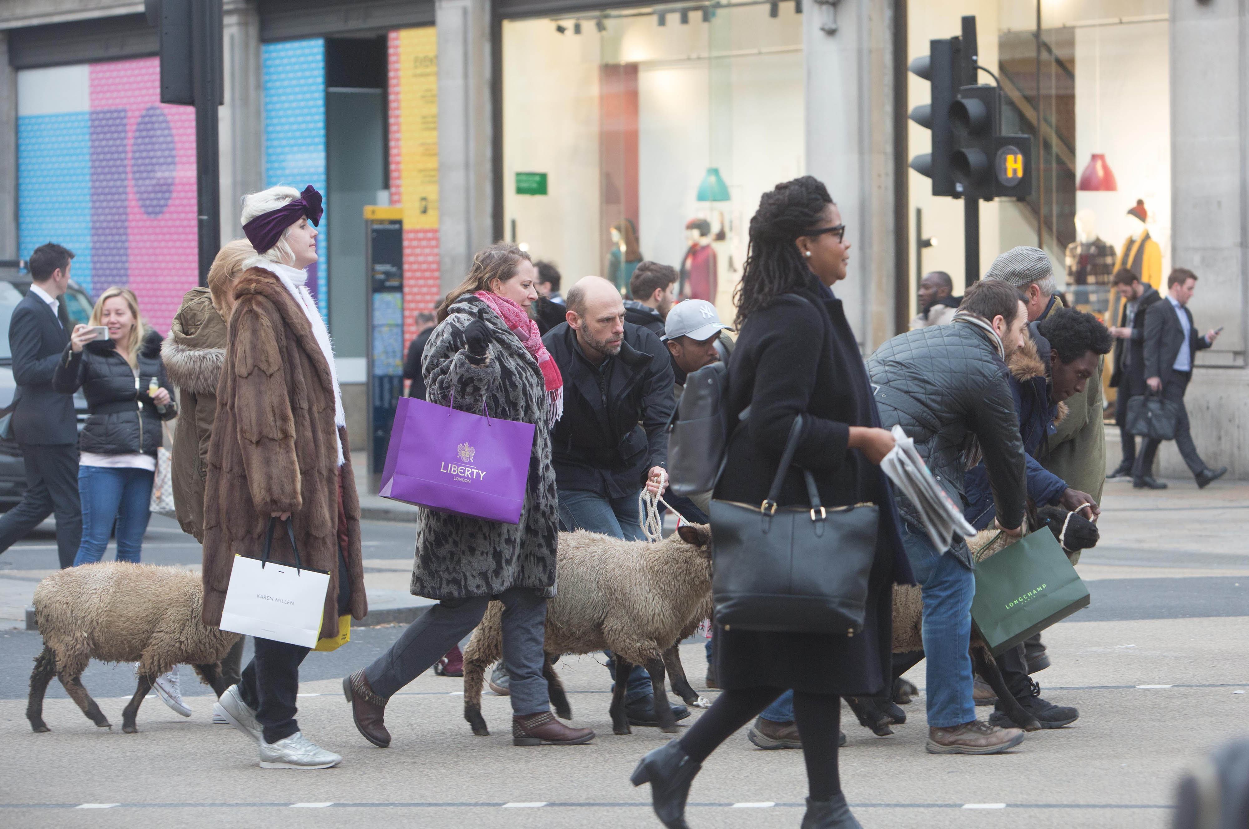 A group of people dressed as shoppers each holding a woolly sheep on a rope cross Oxford St alongside regular commuters.